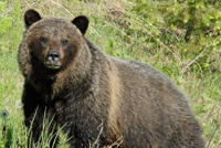 bear hunting petition