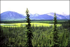 boreal_1